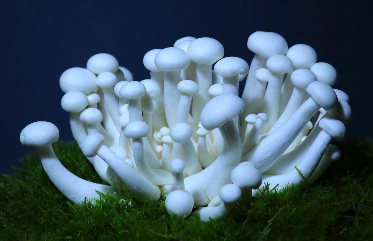 Empadas de cogumelos shimeji - 6